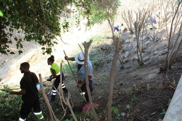 Desbroce del arroyo Alcarihuela