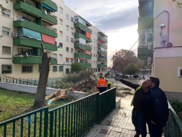 Daños ocasionados por los fuertes vientos en Torremolinos