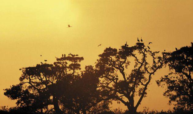 Aves en el Parque Nacional de Doñana