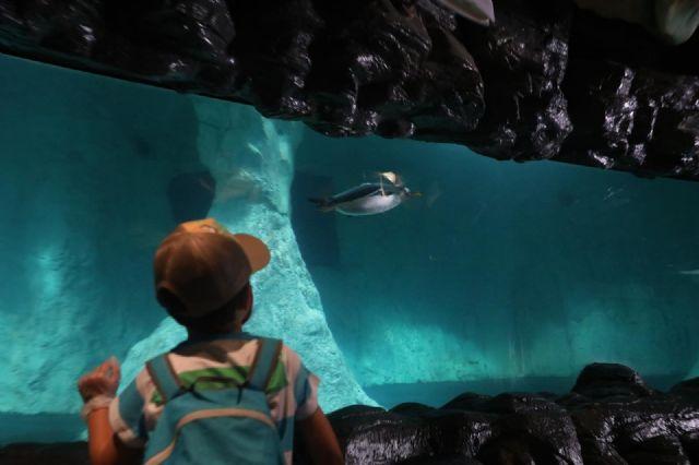 Un niño observa el acuario