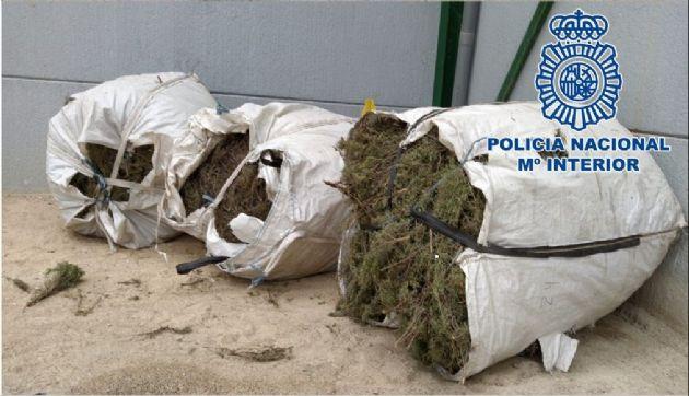 Plantas aromáticas recolectadas de manera ilegal