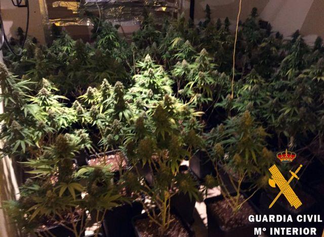 Plantas intervenidas