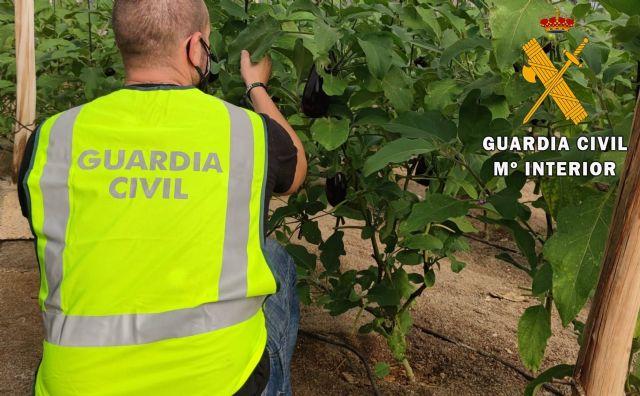 La Guardia Civil esclarece un robo de berenjenas