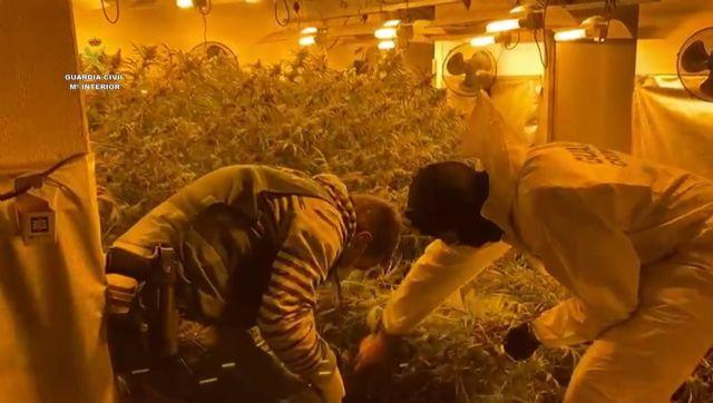 Guardias civiles intervienen una plantación de marihuana indoor en una vivienda