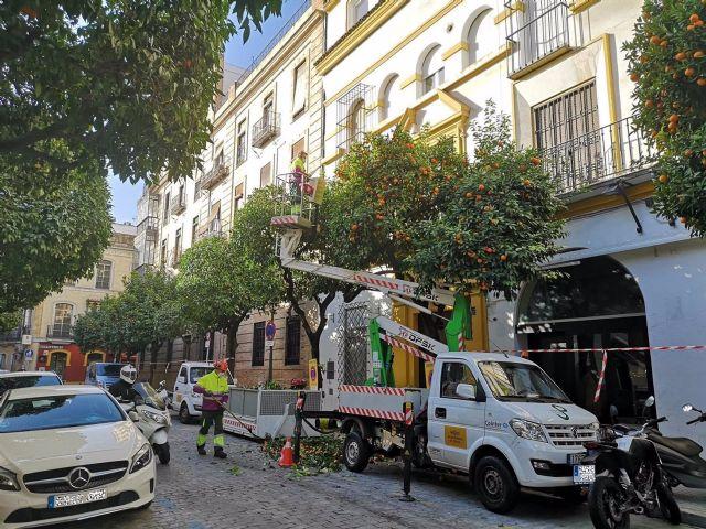 Recogida de naranjas en Sevilla.