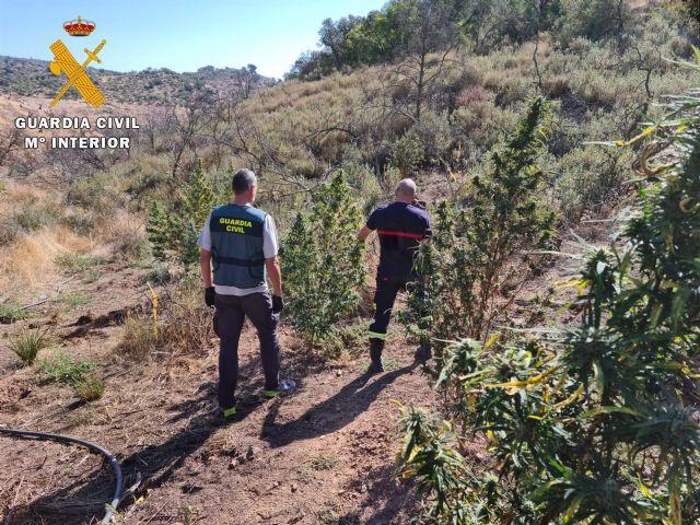 La Guardia Civil interviene en la plantación de marihuana.