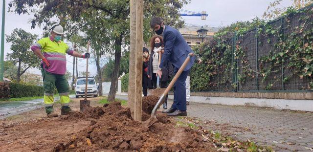 Ayuntamiento de Sevilla supera ya los 1.000 árboles en alcorques antes vacíos y suma 1.800 en la ciudad desde noviembre